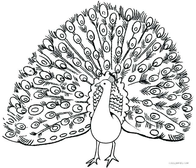 644x550 Peacock Coloring Page Peacock Feather Coloring Page This Is