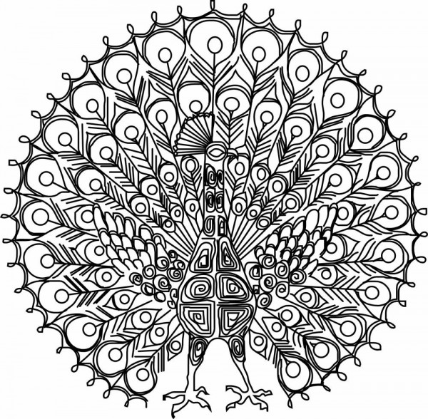 600x588 Peacock Coloring Pages