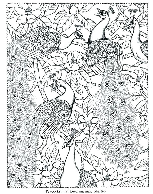 608x770 Peacock Coloring Pages Peacock Images For Coloring Peacock