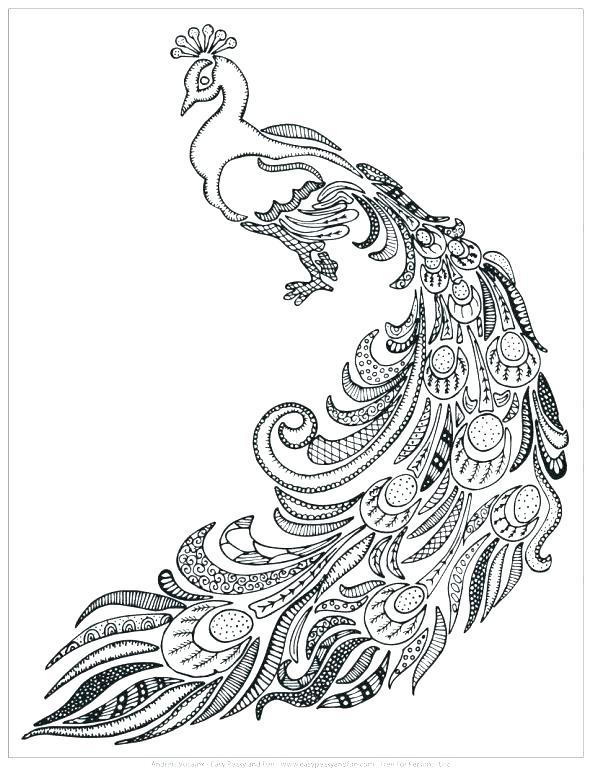 590x772 Peacock Pictures To Color Peacock Color Pages Peacock Color Page