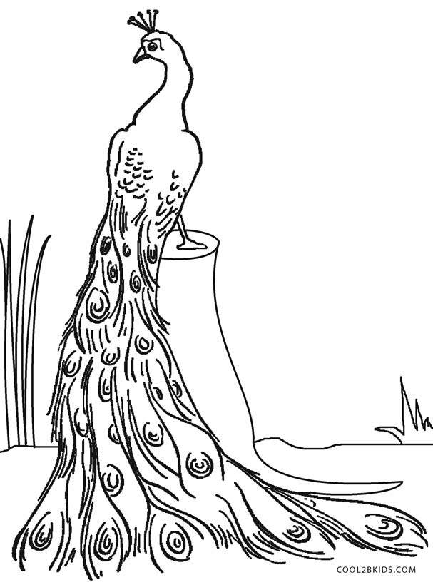 607x820 Printable Peacock Coloring Pages For Kids