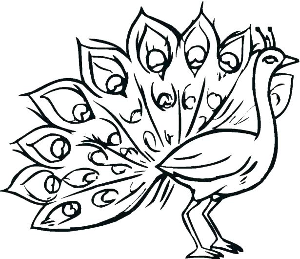 615x530 Coloring Peacock Related Post Printable Coloring Pages For Adults