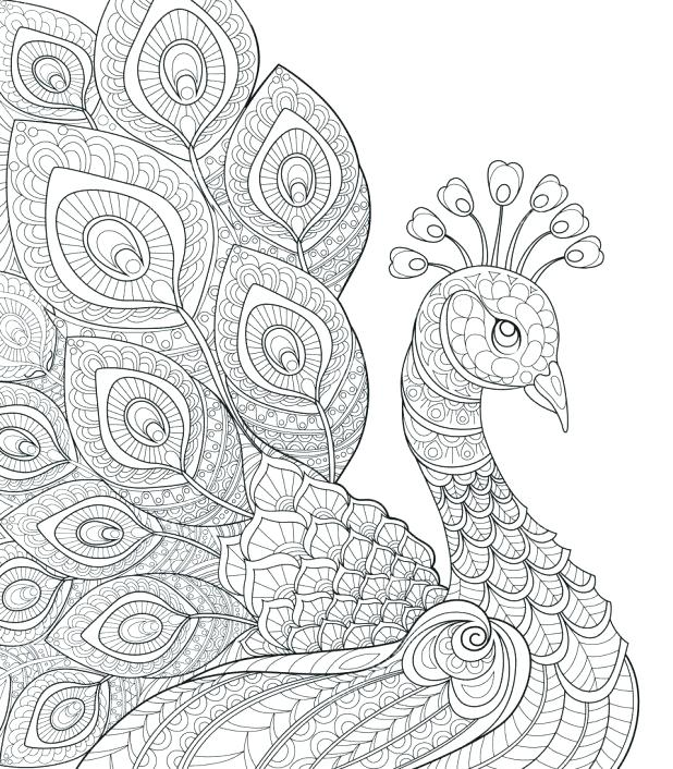 618x706 Feather Coloring Pages Peacock Feather Coloring Page At Printable
