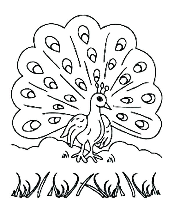 600x733 Peacock Coloring Page Kids Network Pages Printable