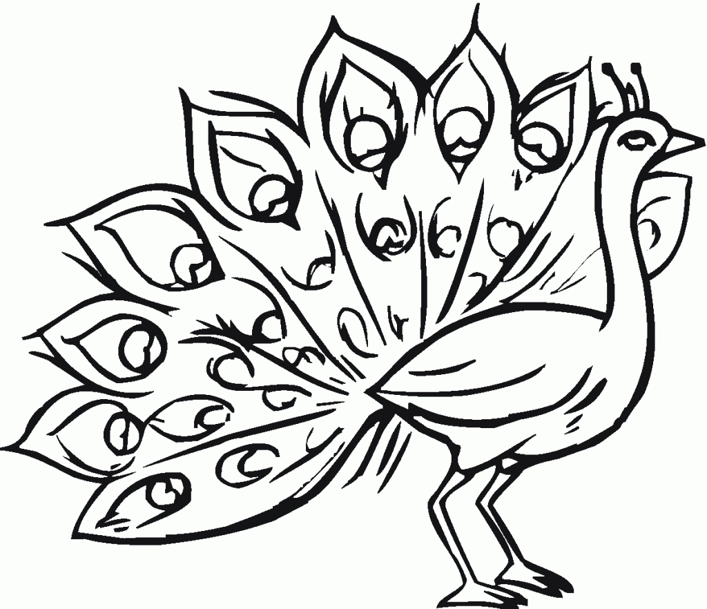 1024x882 Peacock Coloring Page Lovely Free Printable Peacock Coloring Pages