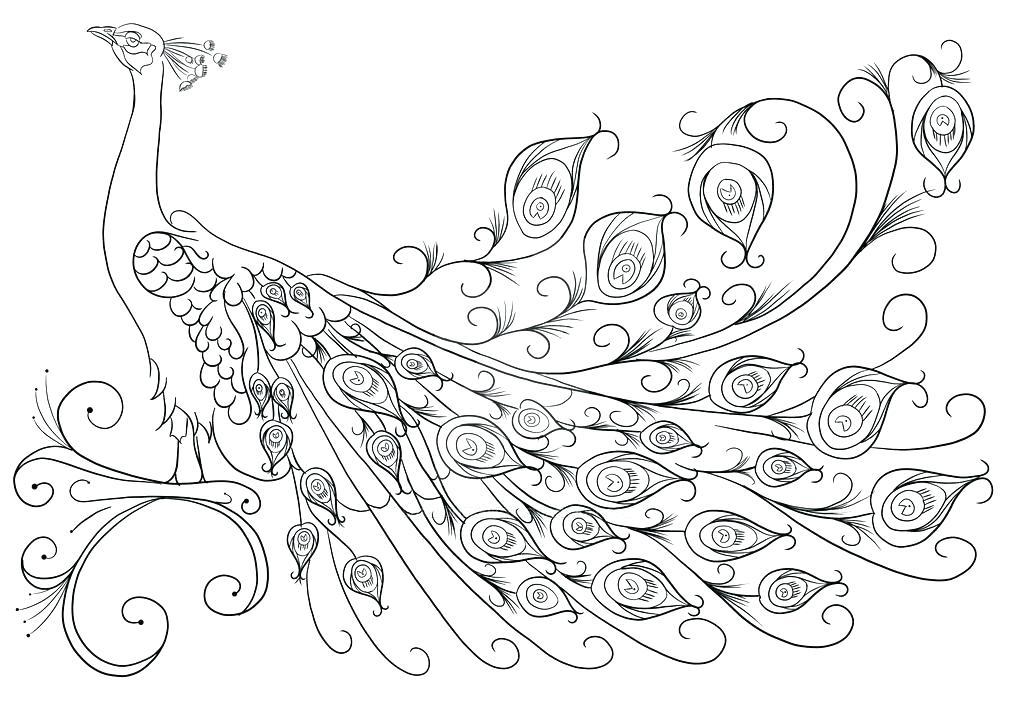 1024x724 Peacock Coloring Page Peacock Coloring Pages For Big Kids