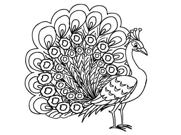 600x448 Beautiful Peacock Coloring Page With Additional Crayola Photo