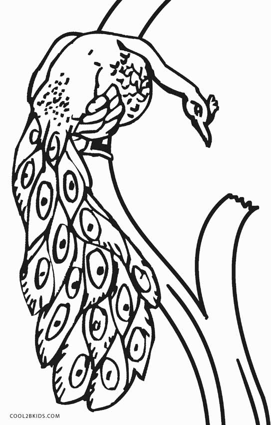 543x850 Printable Peacock Coloring Pages For Kids