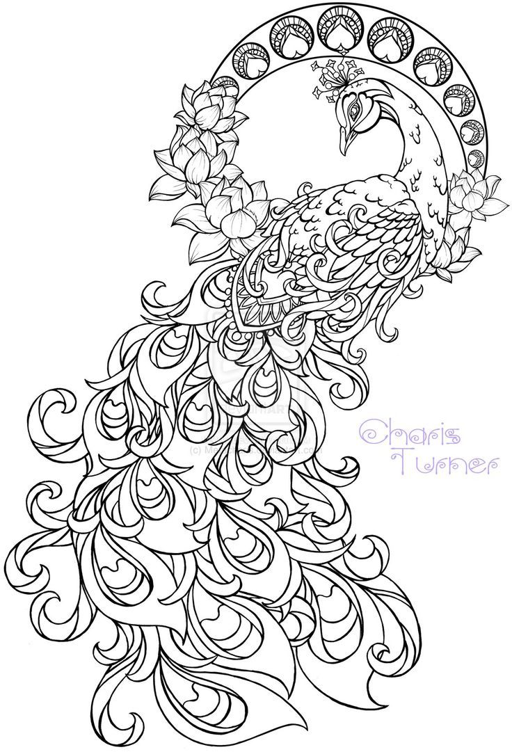 736x1081 Realistic Peacock Coloring Pages Free Coloring Page Printable