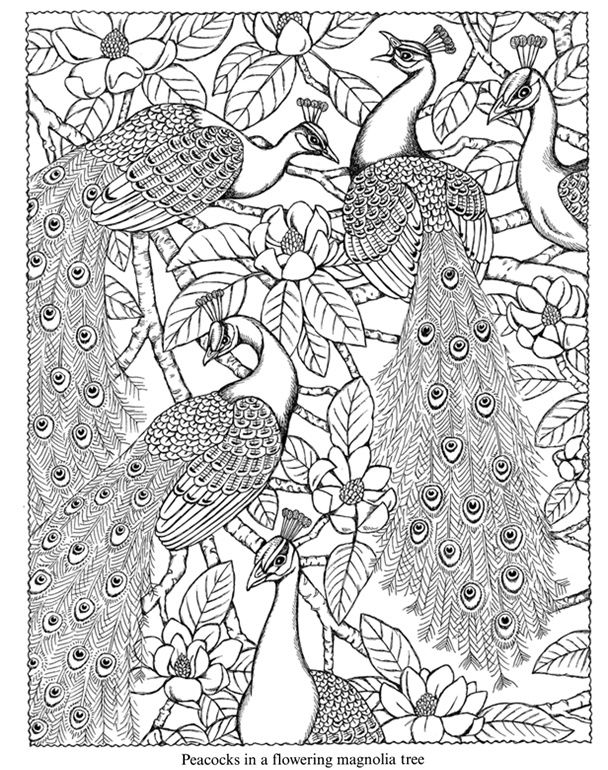 608x770 Adult Coloring Pages Peacock Nature Coloring Pages Coloring Pages