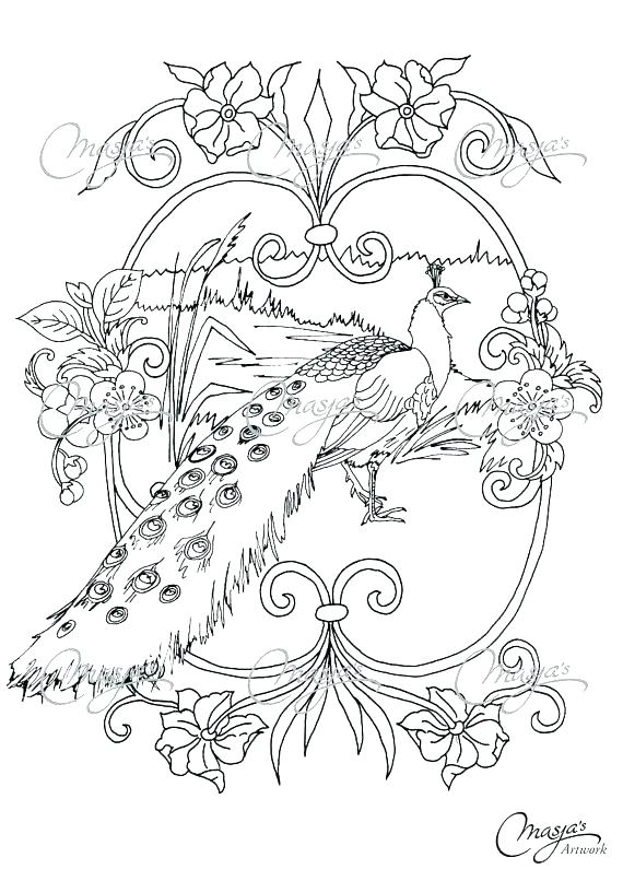 570x806 Peacock Coloring Pictures