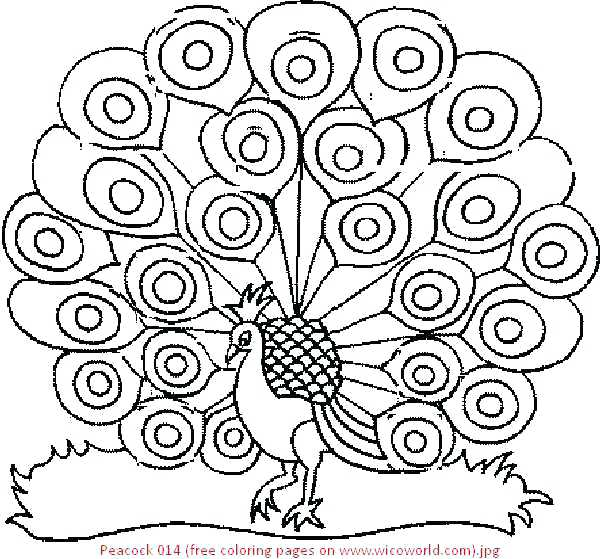 600x559 Peacock Coloring Pages Peacock Coloring Page Peacock Coloring