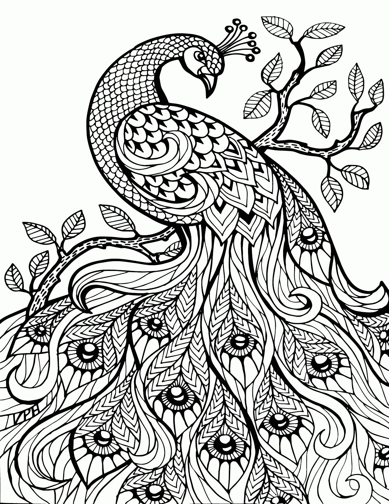 1275x1650 Peacock Feather Coloring Pages Colouring Adult Detailed Advanced