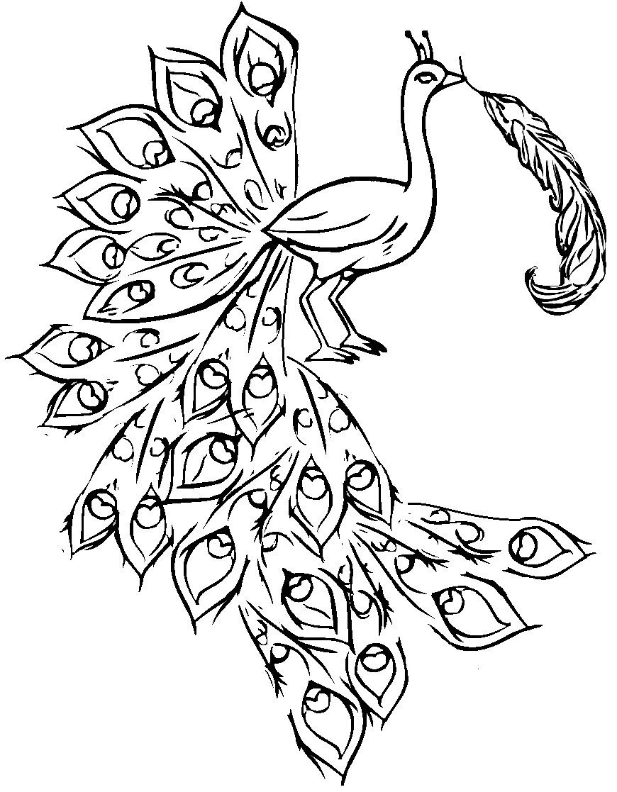 870x1117 Peacock Feather Outline Coloring Page