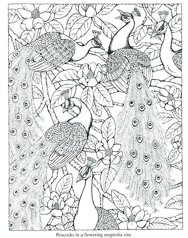 608x770 Peacock Pictures Coloring Pages Peacock Coloring Pages Excellent
