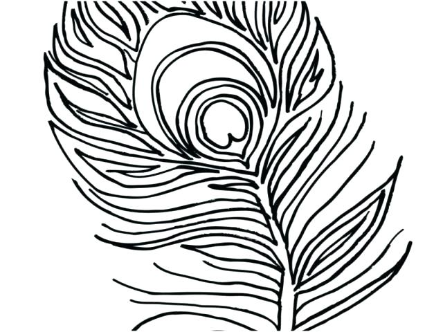 640x480 Peacock Pictures To Color Peacock Coloring Page Coloring Page