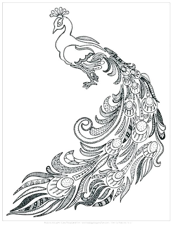 590x772 Cool Peacock Feather Coloring Page Peacock Feather Coloring Page