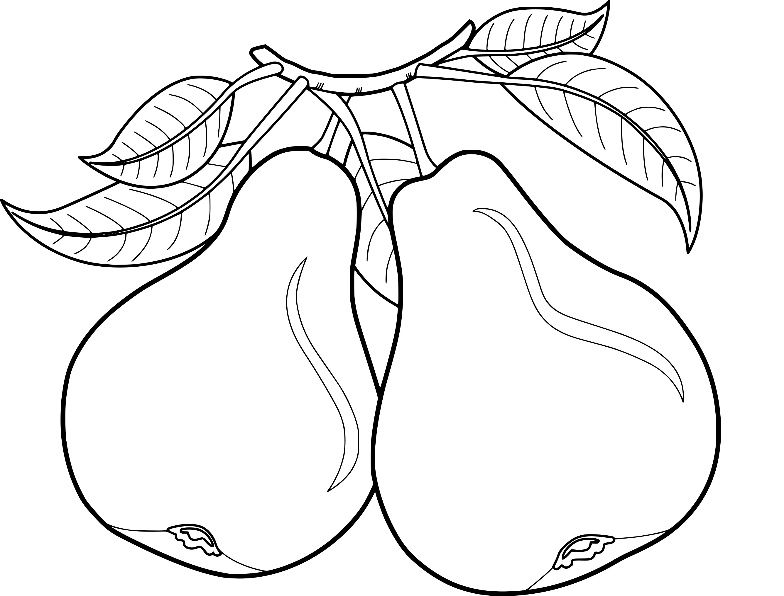 2672x2034 Pears Coloring Page