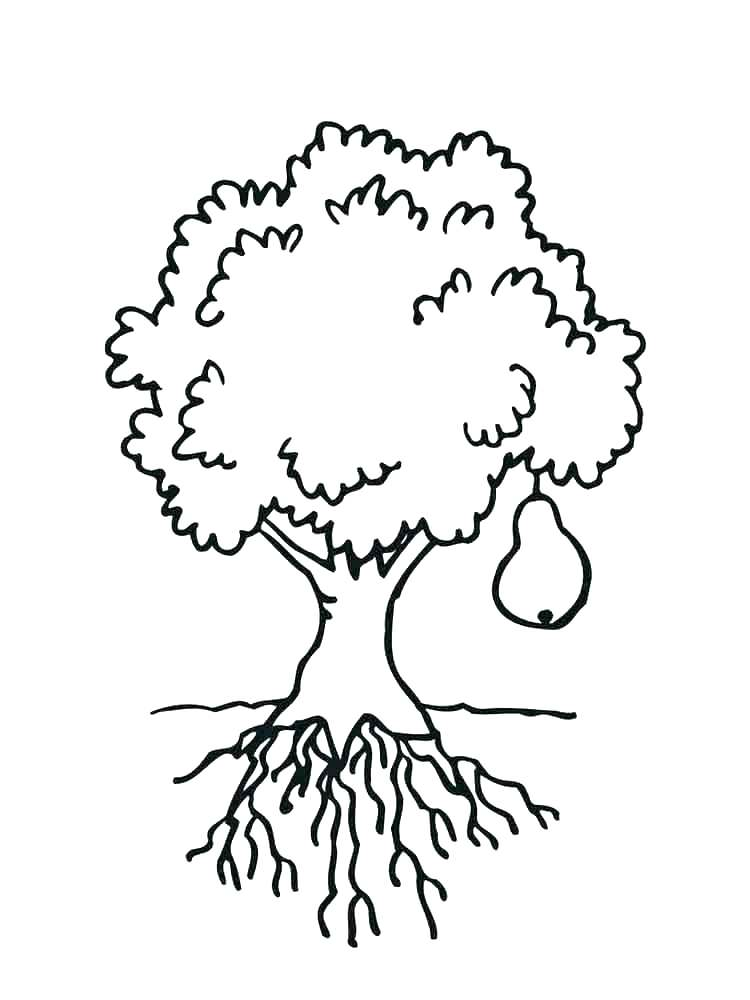 750x1000 Cactus Coloring Pages Pear Coloring Page Cactus Coloring Free