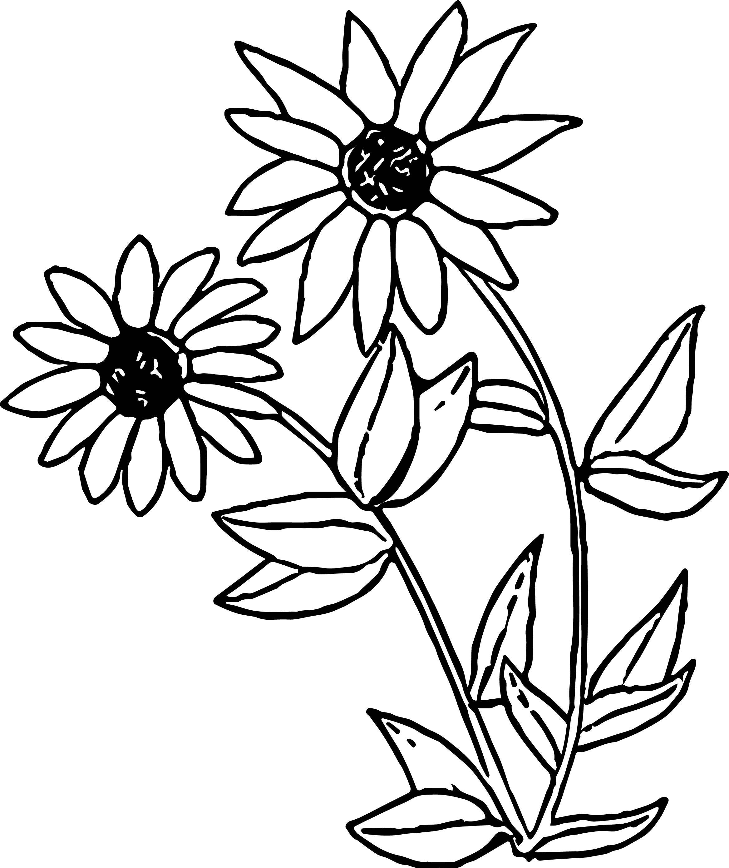 Peas Coloring Page