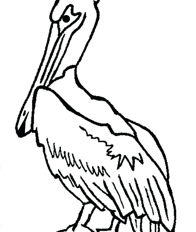 761x900 Coloring For Kids Pelican Page Pages Unusual Eastern Brown Pelican