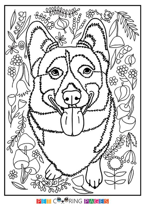 500x711 Pembroke Welsh Corgi Coloring Page Ralph