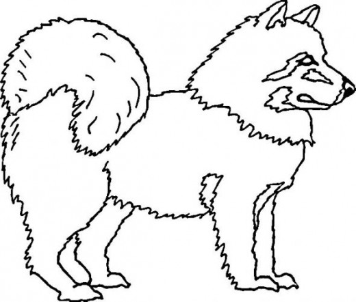 520x442 Welsh Corgi Coloring Pages