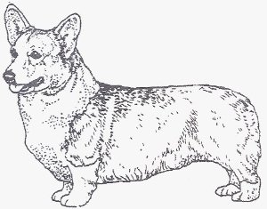300x235 Corgi Coloring Page Never Too Old To Color Corgi
