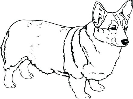 440x330 Coloring Pages Of Corgis