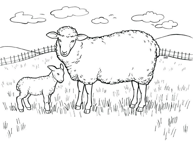 791x608 Pen Coloring Pages Sheep Coloring Pages In Field A Pig Pen
