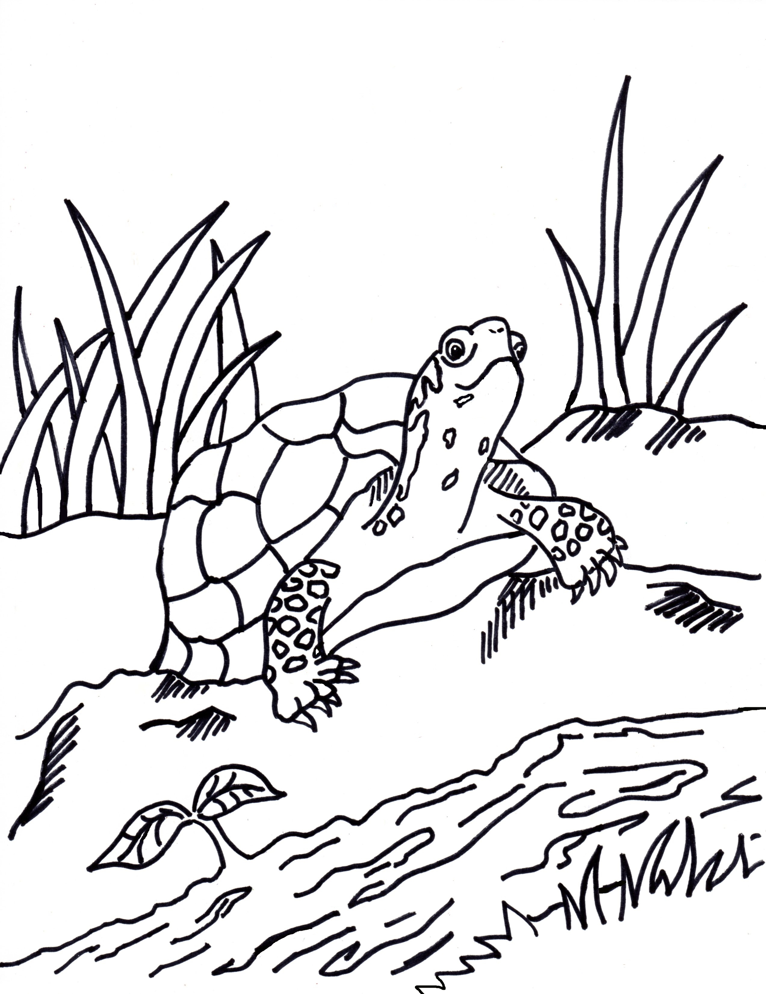 2545x3300 Free Coloring Pages And Reference Pictures