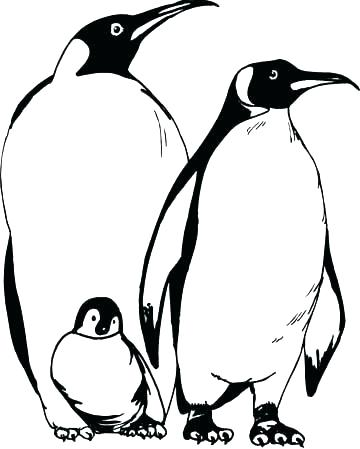 360x449 Coloring Pages Penguin Penguin Color Page Animal Coloring Pages