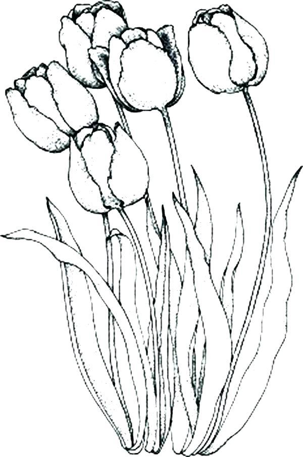 600x905 Tulip Coloring Page Tulip Coloring Pages Coloring Trend Thumbnail