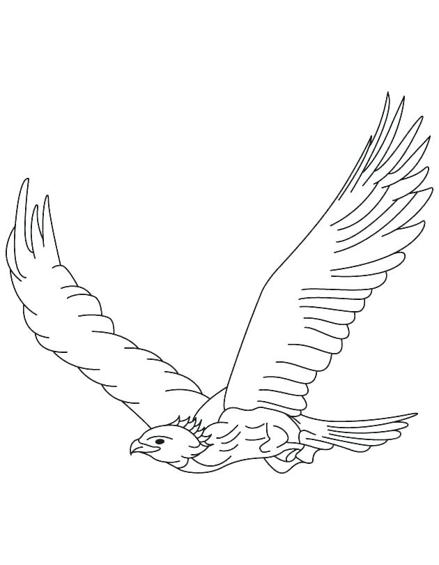 630x810 Harpy Eagle Coloring Page Peregrine Falcon Coloring Page Harpy