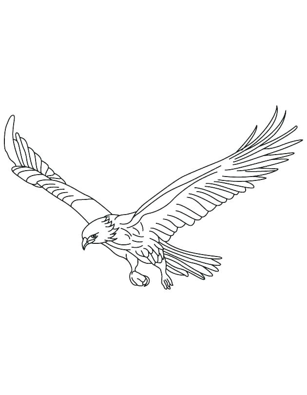Peregrine Falcon Coloring Page at GetDrawings | Free download