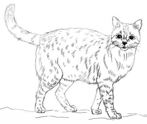 480x403 Realistic Cat Coloring Page From Cats Category Select