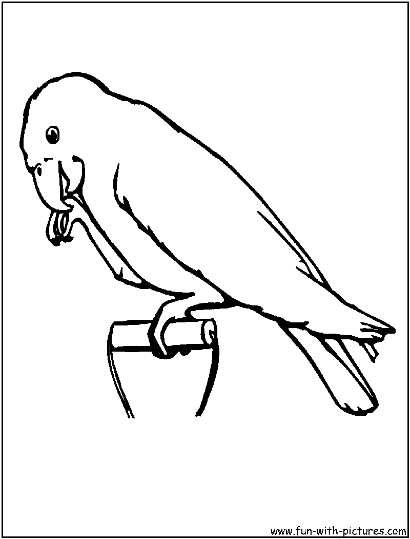 800x1050 Pet Animals Coloring Pages