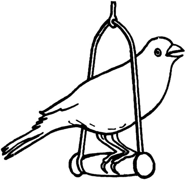 600x579 Canary Bird Pet Coloring Pages Best Place To Color