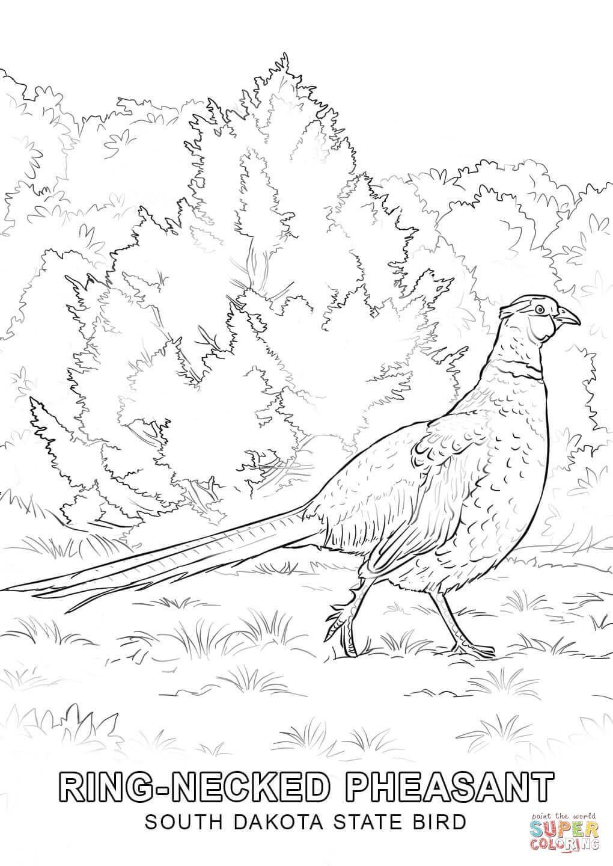 1020x1440 Image Result For South Dakota Pheasant Drawing South Dakota