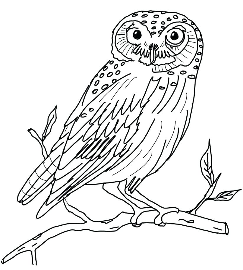 824x913 Philippine Flag Coloring Page Flag Coloring Page Flag Coloring