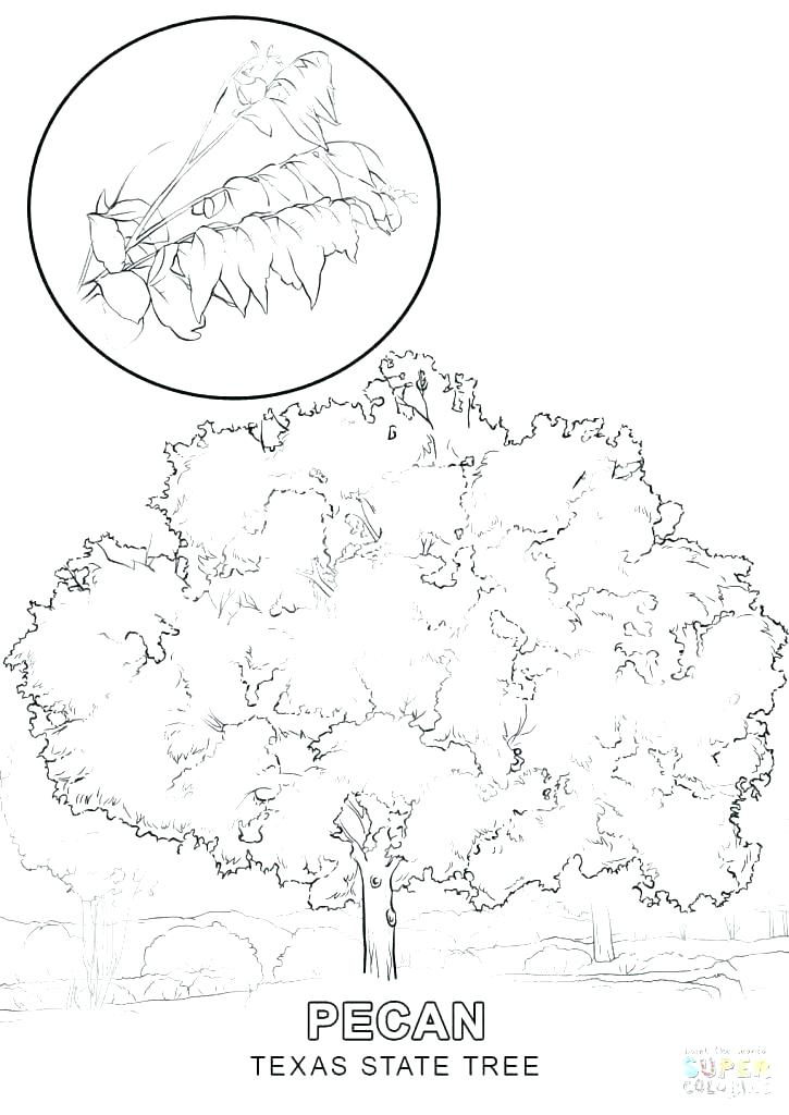 725x1024 Us Symbols Coloring Pages Patriotic Coloring Pages Remarkable