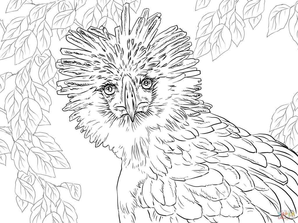 1024x768 Eagle Coloring Pages Philippine Portrait Page Picture Ideas