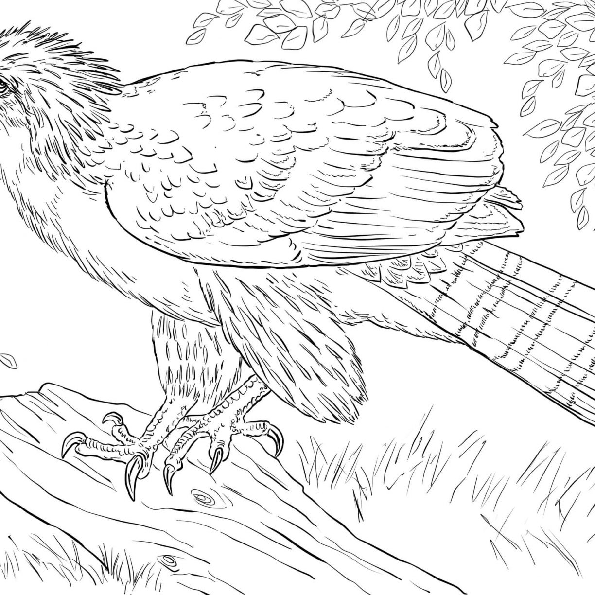 1224x1224 Bald Eagle Coloring Page Free Printable Book Picture Harpy Feather
