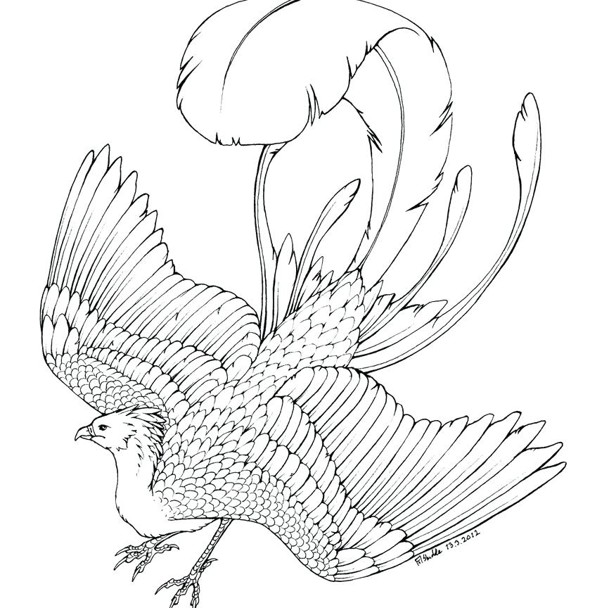 Phoenix Bird Coloring Pages At Getdrawings Free Download