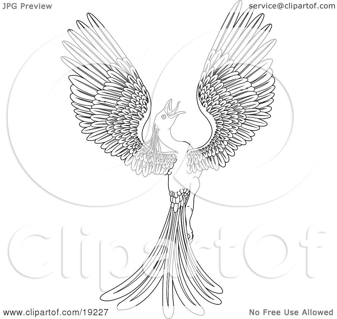 1080x1024 Coloring Pages Phoenix Bird Copy Clipart Illustration Of A Black