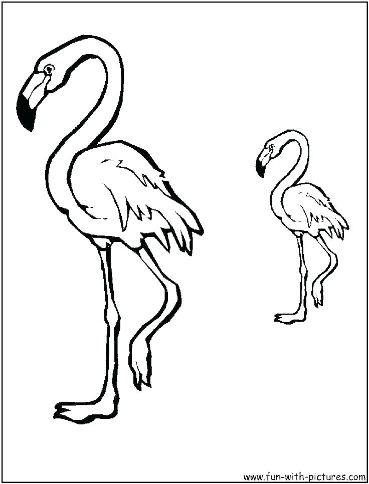 736x966 Bird Coloring Pages For Adults Packed With Phoenix Bird Bird