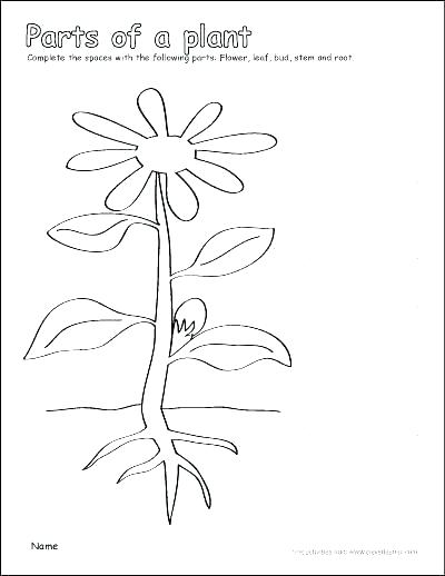 400x518 Cell Structure Coloring Worksheet Plant Cell Coloring Sheet Plant
