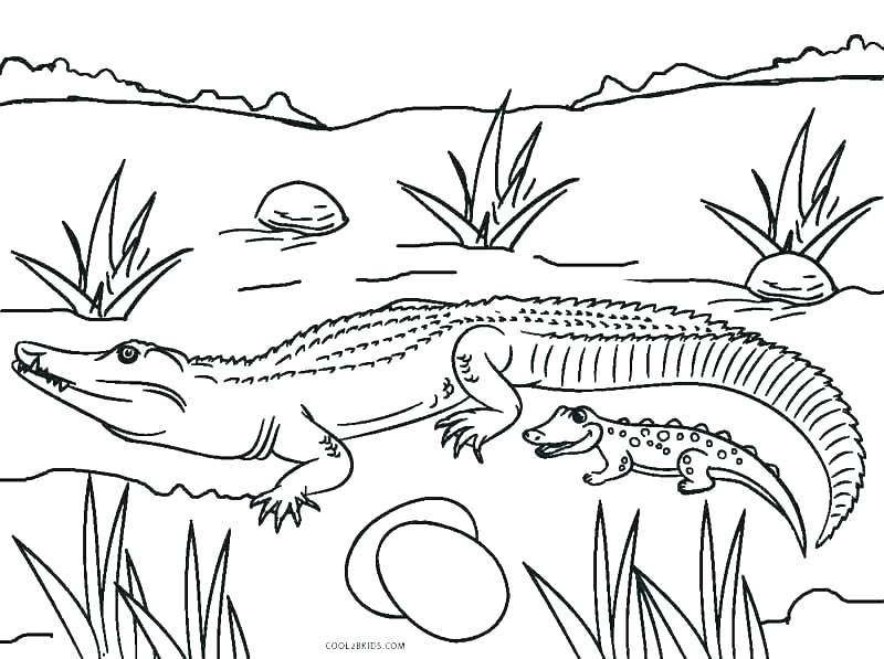 800x597 Picnic Coloring Page Picnic Coloring Page Alligator Coloring Pages