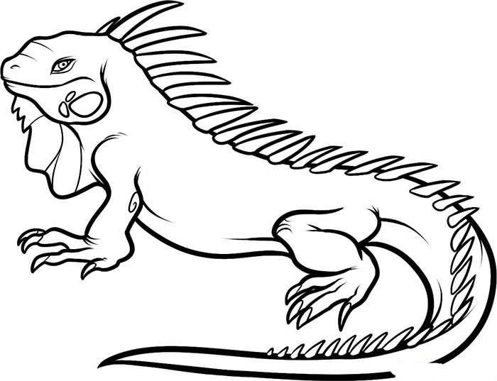 Pictures Of Animals Coloring Pages
