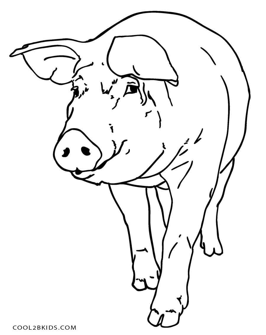900x1132 Free Printable Pig Coloring Pages For Kids